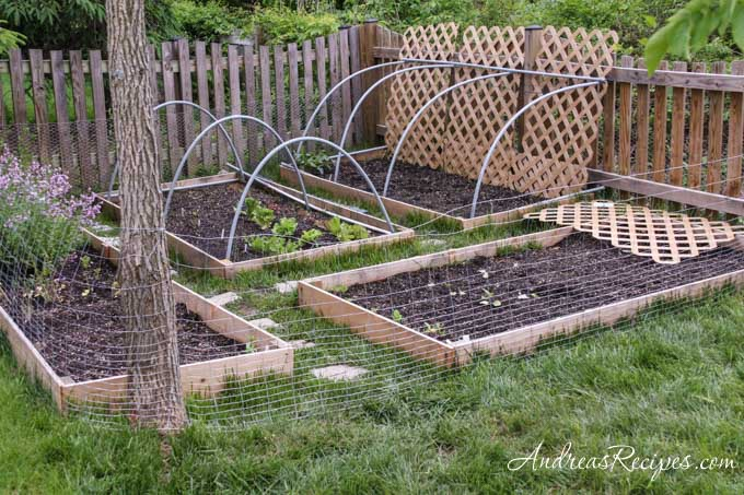 Weekend Gardening Not All Garden Pests Have Wings Rabbits Andrea